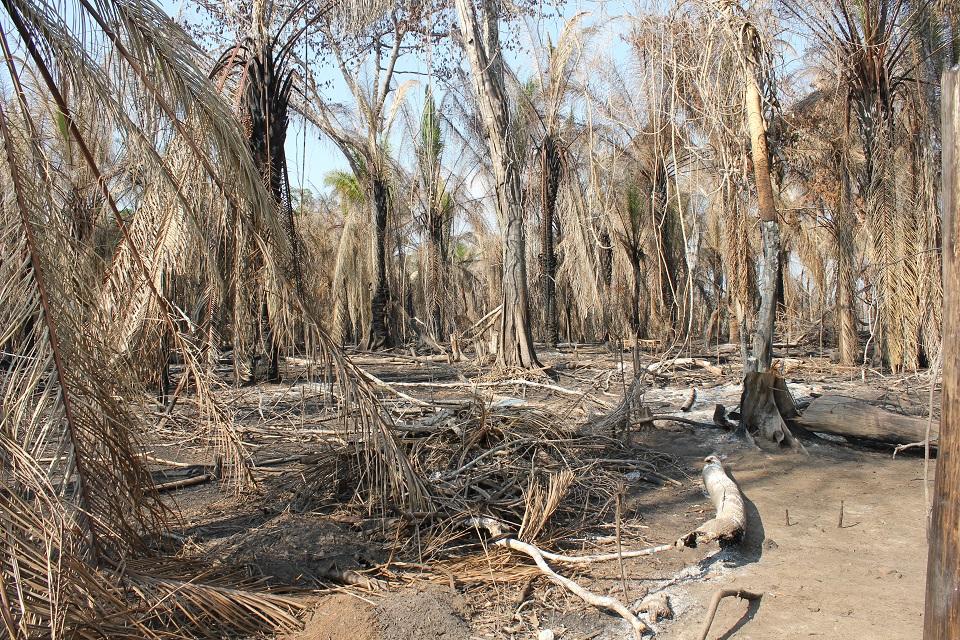 Jirau-prosjektet førte i 2014 til ein storflaum som først oversvømte store områder, drukna vegetasjonen i området før den etterlet store tørkeramma områder då den trakk seg attende, foto: Tora Systad Tyssen