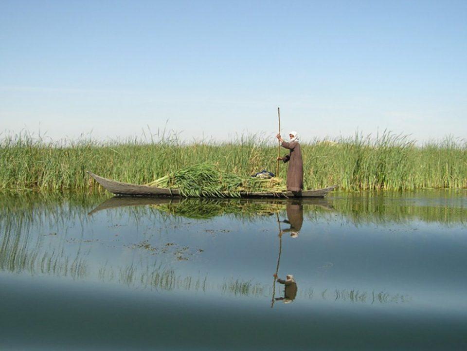 En mann i båt langs Mesopotamias våtmarksområde. Foto: Nature Iraq/CIMI/BirdLife International